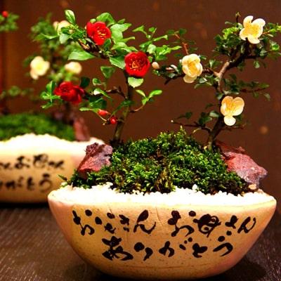 Taku Nakano CeramicArts「カスタムメイド苗木鉢」